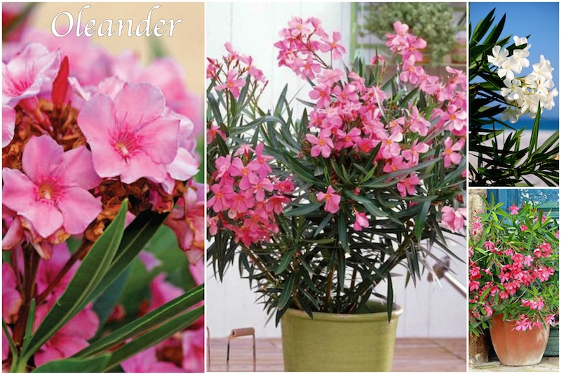 Otrovne biljke u kući zaštitite bebe i djecu mamaklik