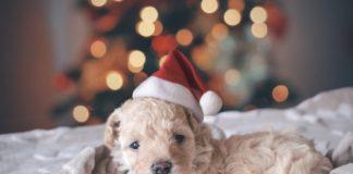 Pas se boji petardi - Evo kako zaštititi kućne ljubimce od praznične buke!